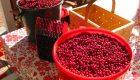 Cherry picker: traduzione e significato